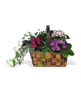 African Violet & Ivy Basket